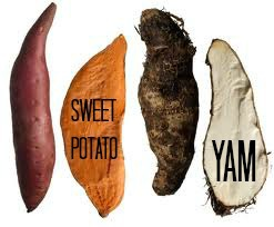sweet-pot-vs-yam2.jpg