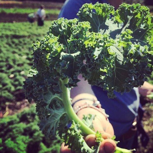 Freshly picked organic kale.  Yes, that's me in the field!