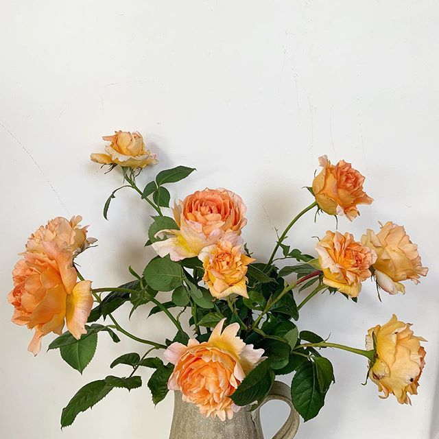 literal garden roses 🤗