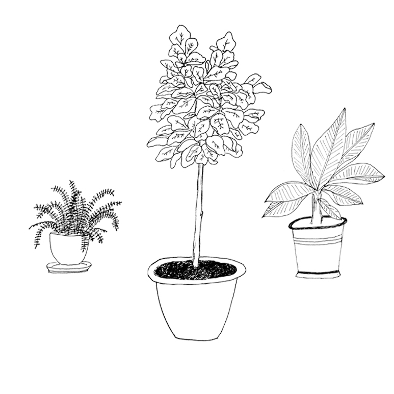 house plants preview individual.jpg