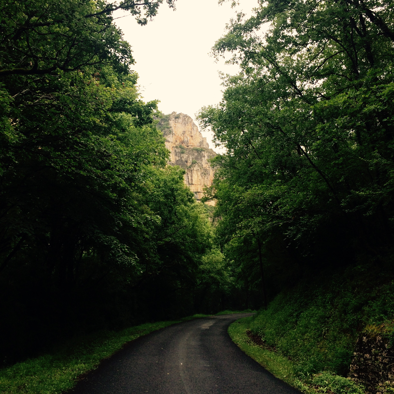 A beautiful quiet road. Walking in the rain.