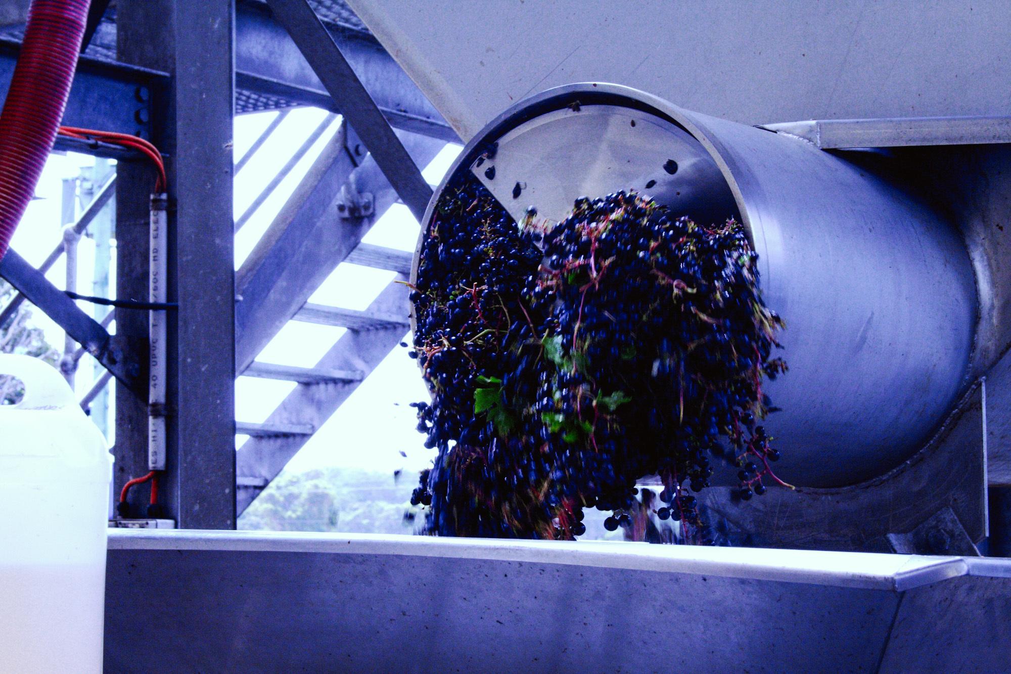 winemaking-14.jpg