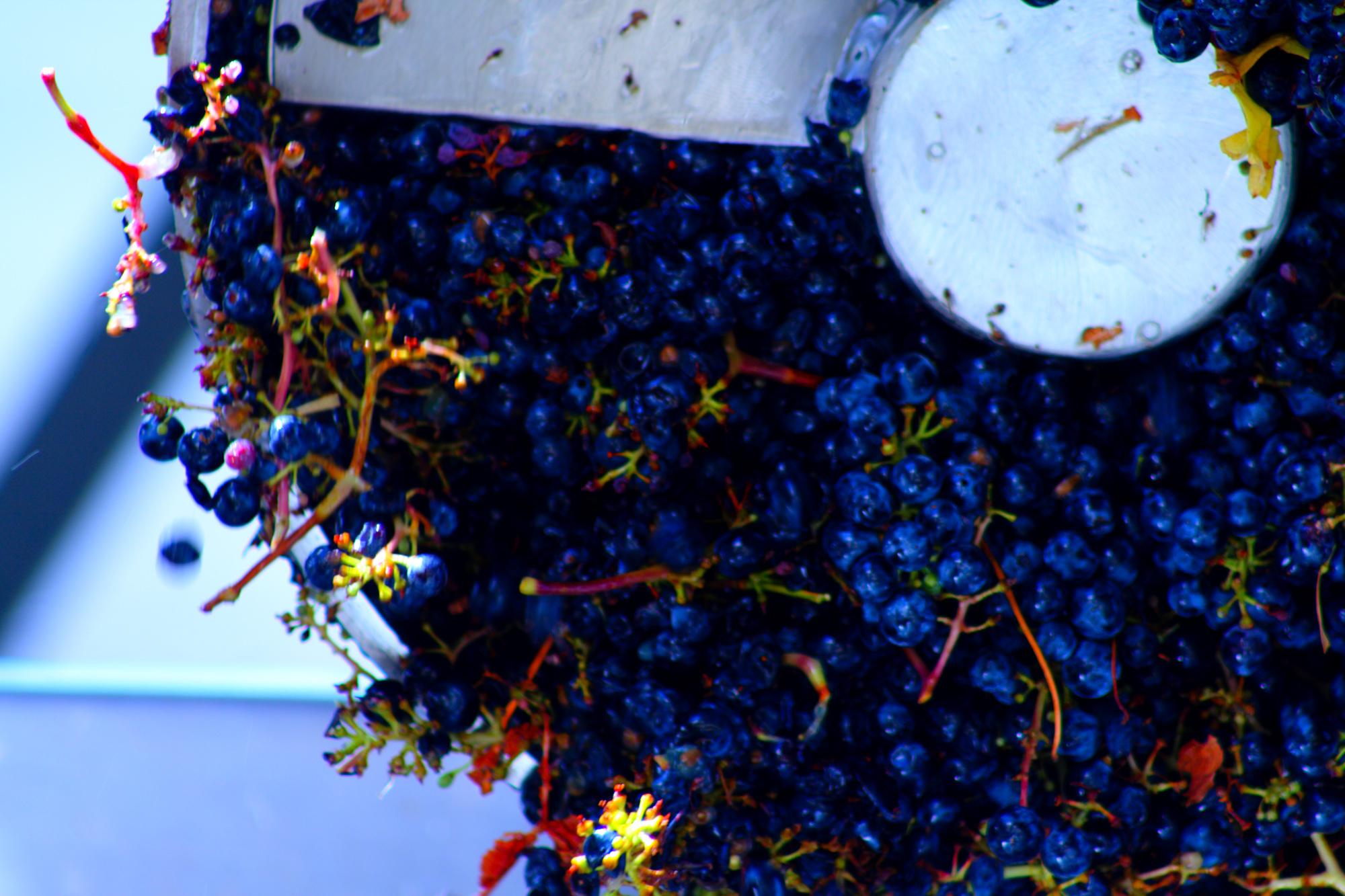 winemaking-20.jpg
