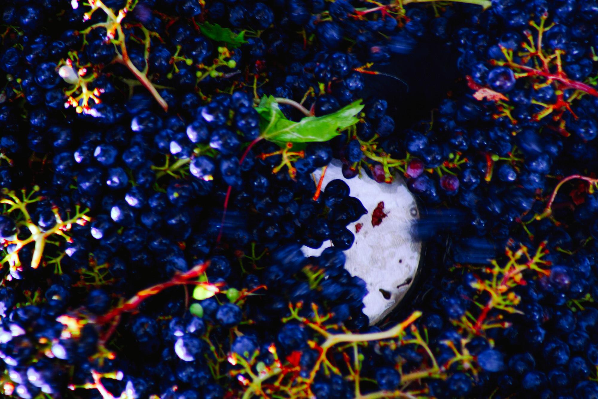 winemaking-21.jpg