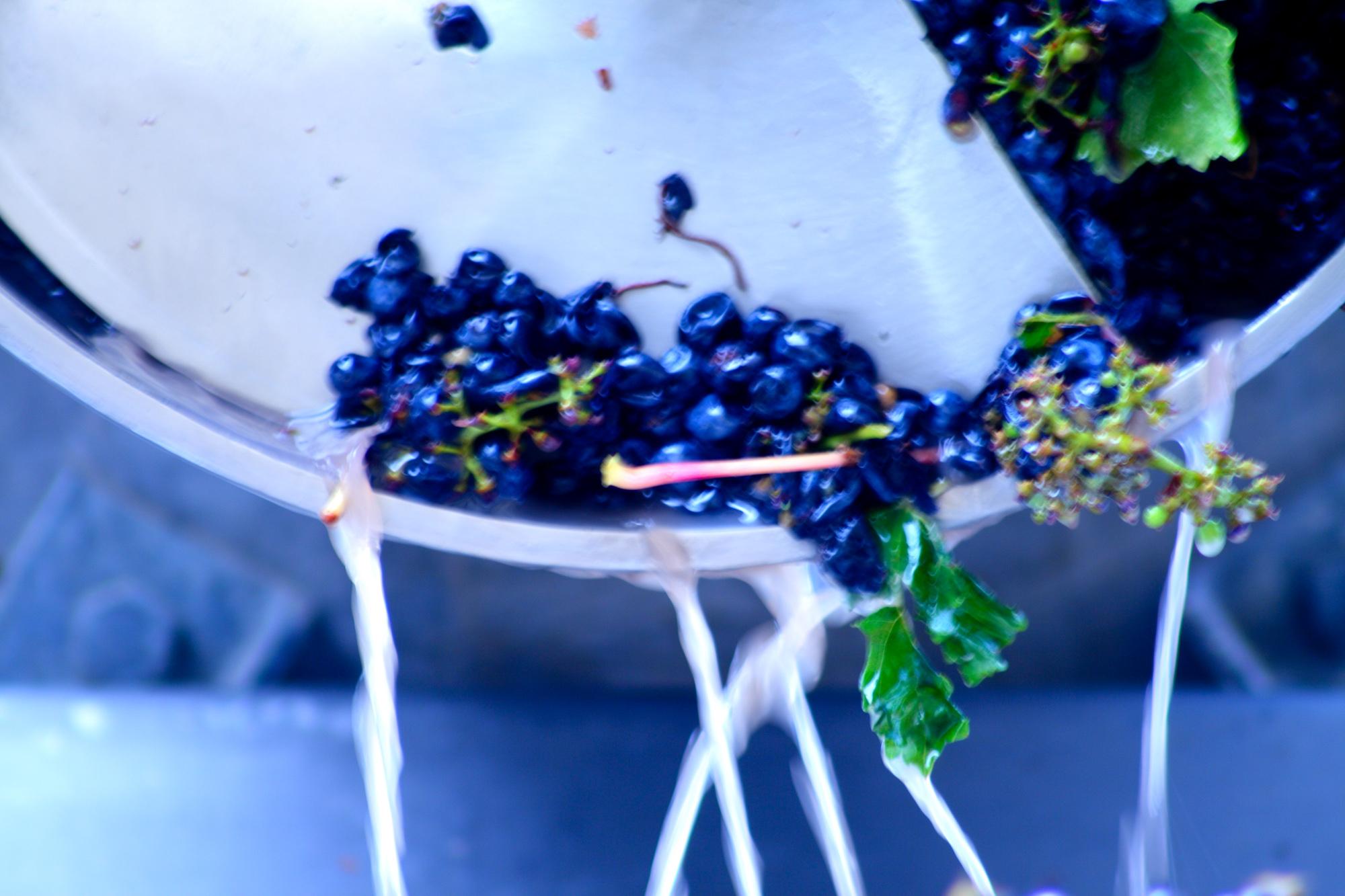 winemaking-27.jpg