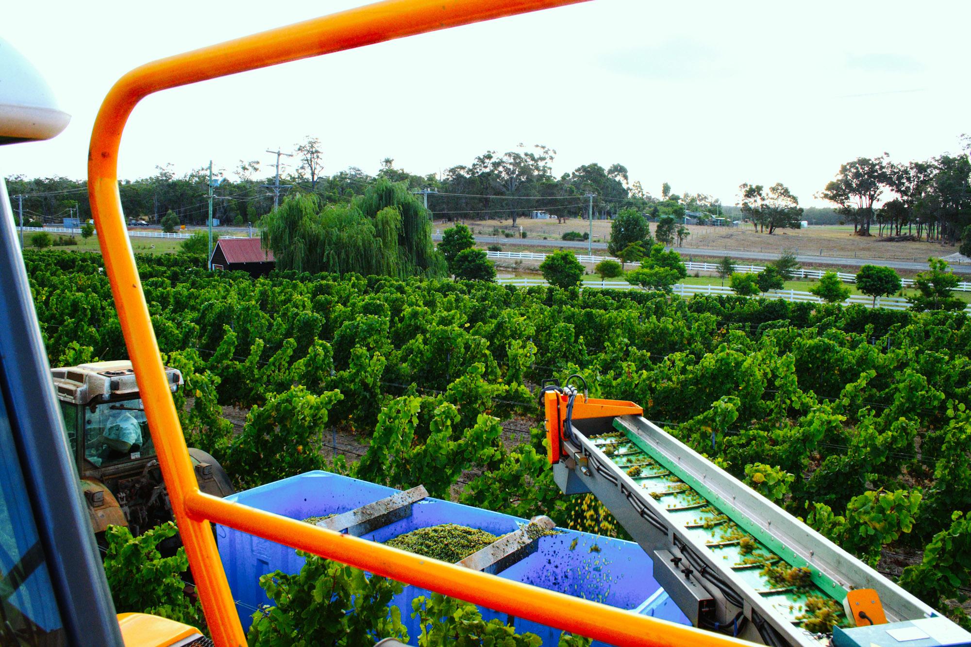winemaking-33.jpg