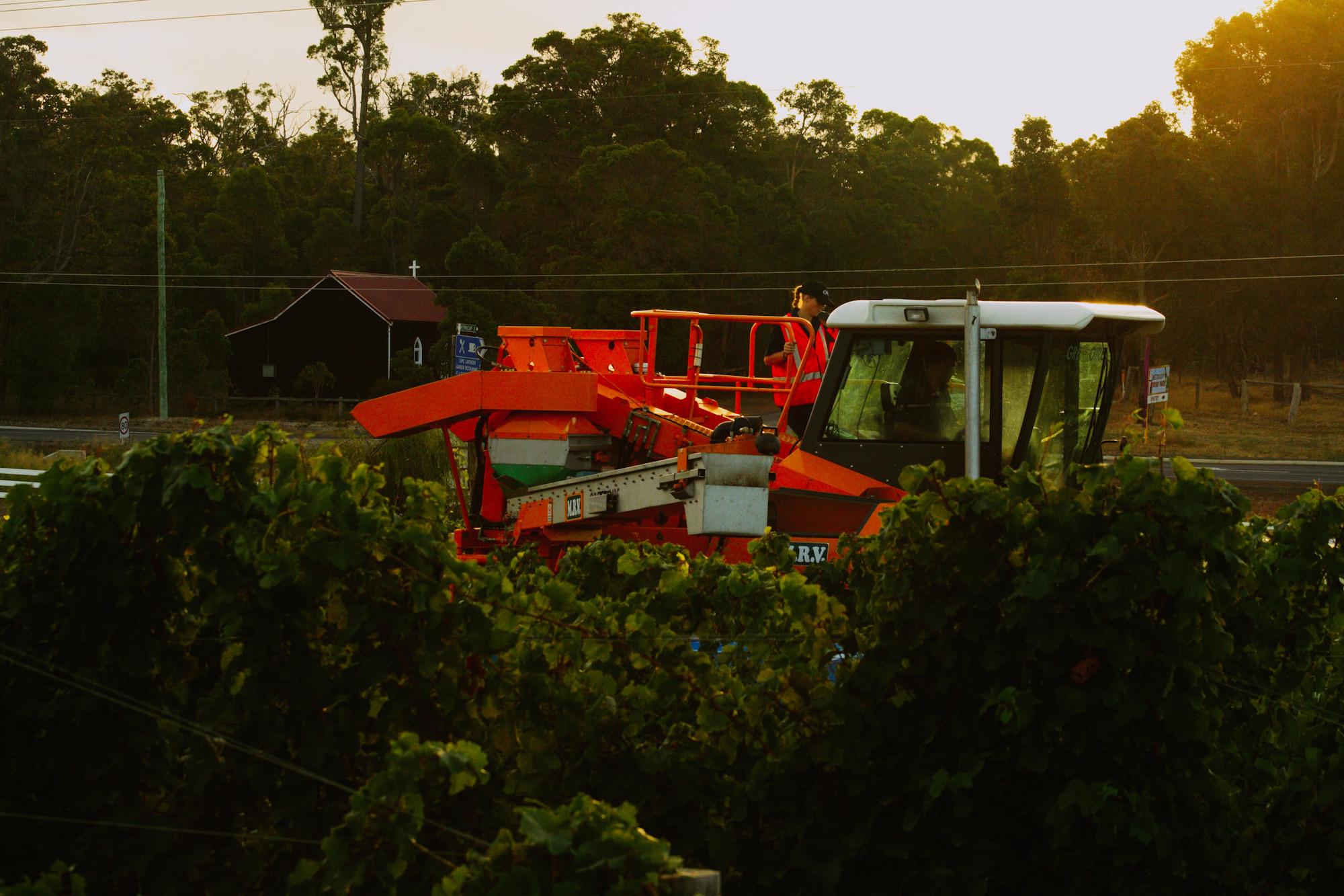 winemaking-36.jpg