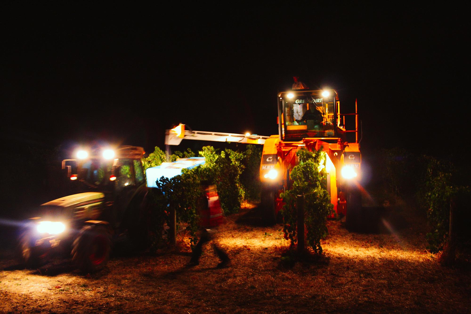 winemaking-37.jpg