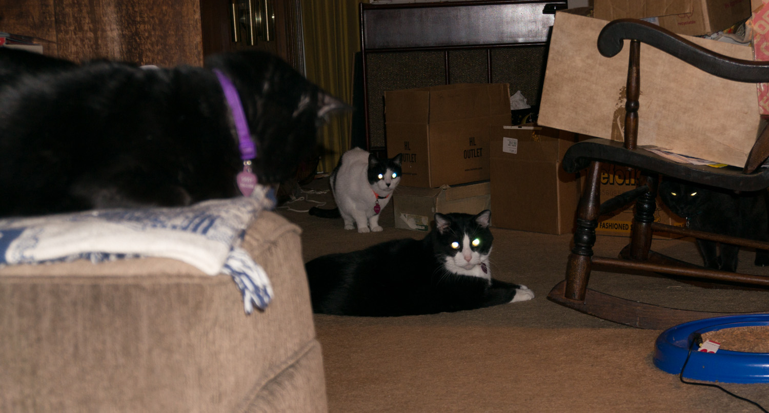 Cherie's new housemates! Sis, Flash, Buddy and Claude.