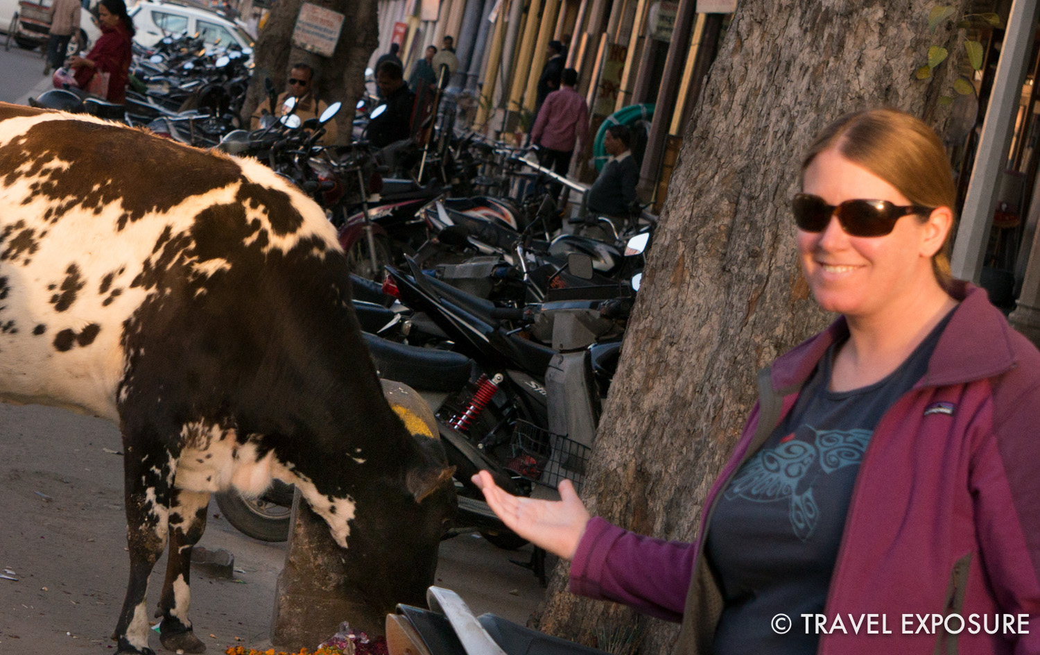 This cow actually moo-ed at me!