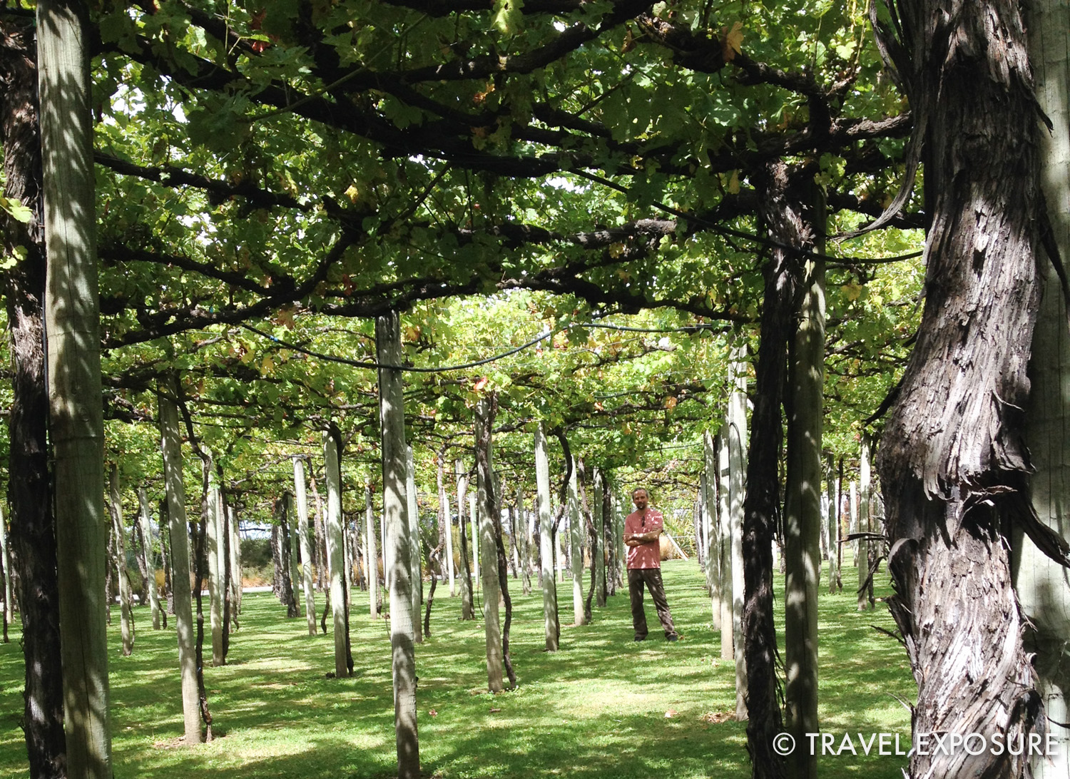 Visiting the wineries in Marlborough