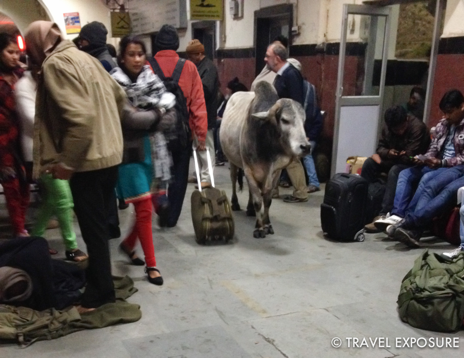 A cow wanders on the platform at the Jhansi train station