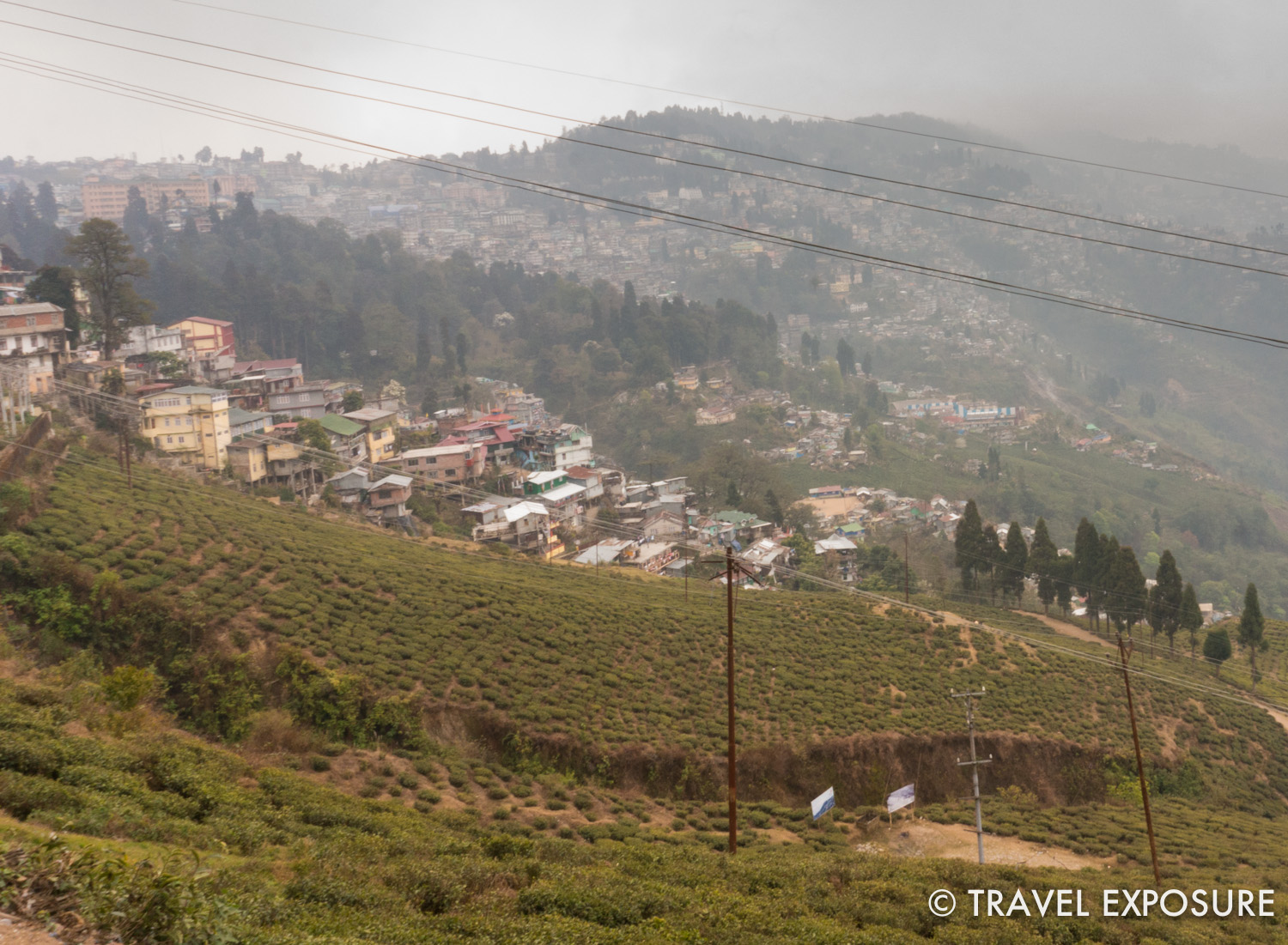 The Happy Valley Tea Estate in Darjeeling. It provides the tea used at Harrods.