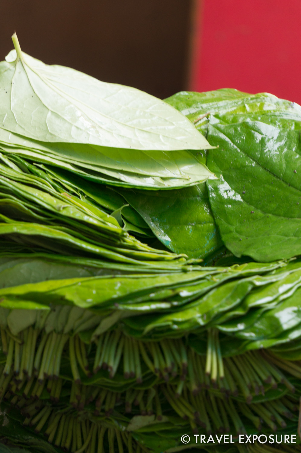 "Betel leaves used to wrap ingredients to make ""paan."" Fillings may include a mix of spices, fruits, and sugar, betel nuts, and/or tobacco."