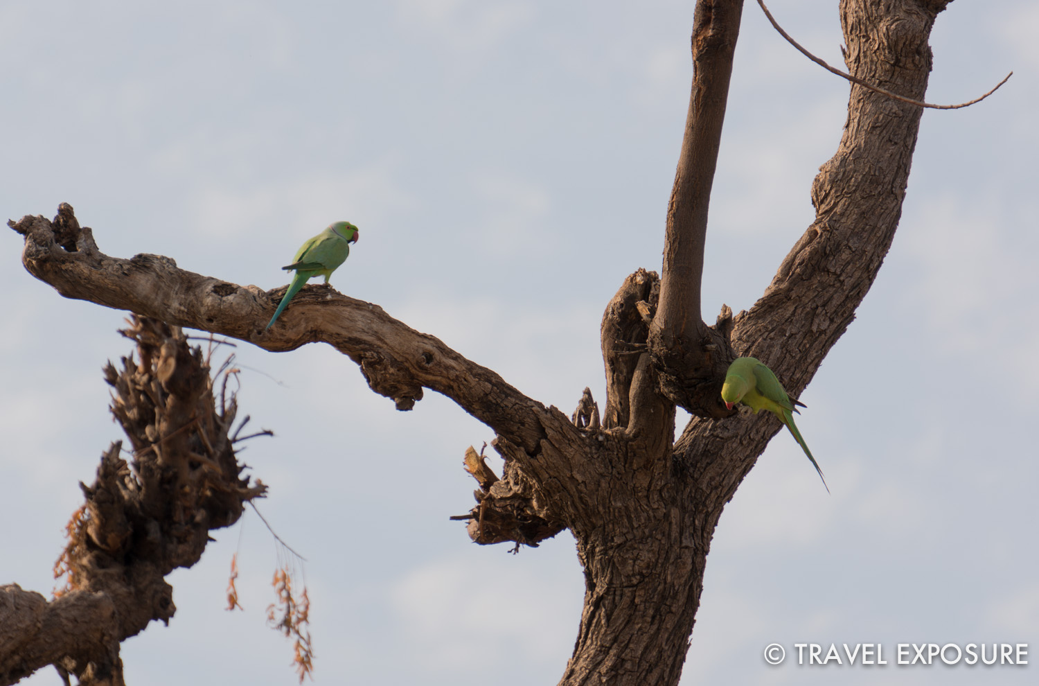 Colorful birds in the trees in  Tordi Sagar village