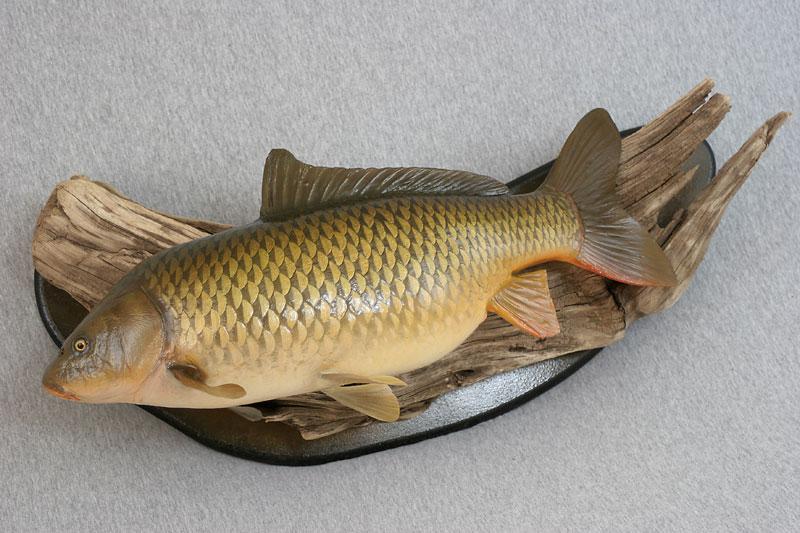Custom reproduction carp