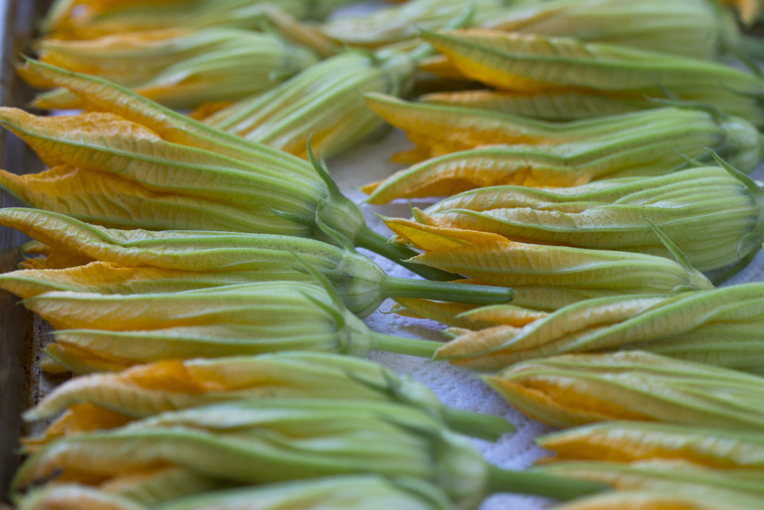 stuffed_squash_blossoms_00016.jpg