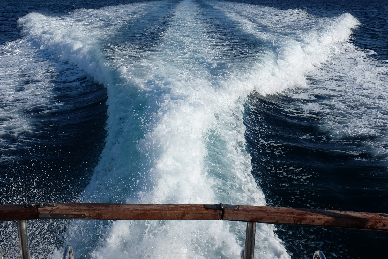 WaveTail.jpg