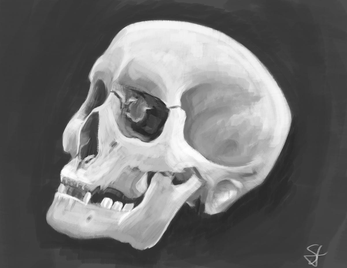 Skull01_sv1.jpg
