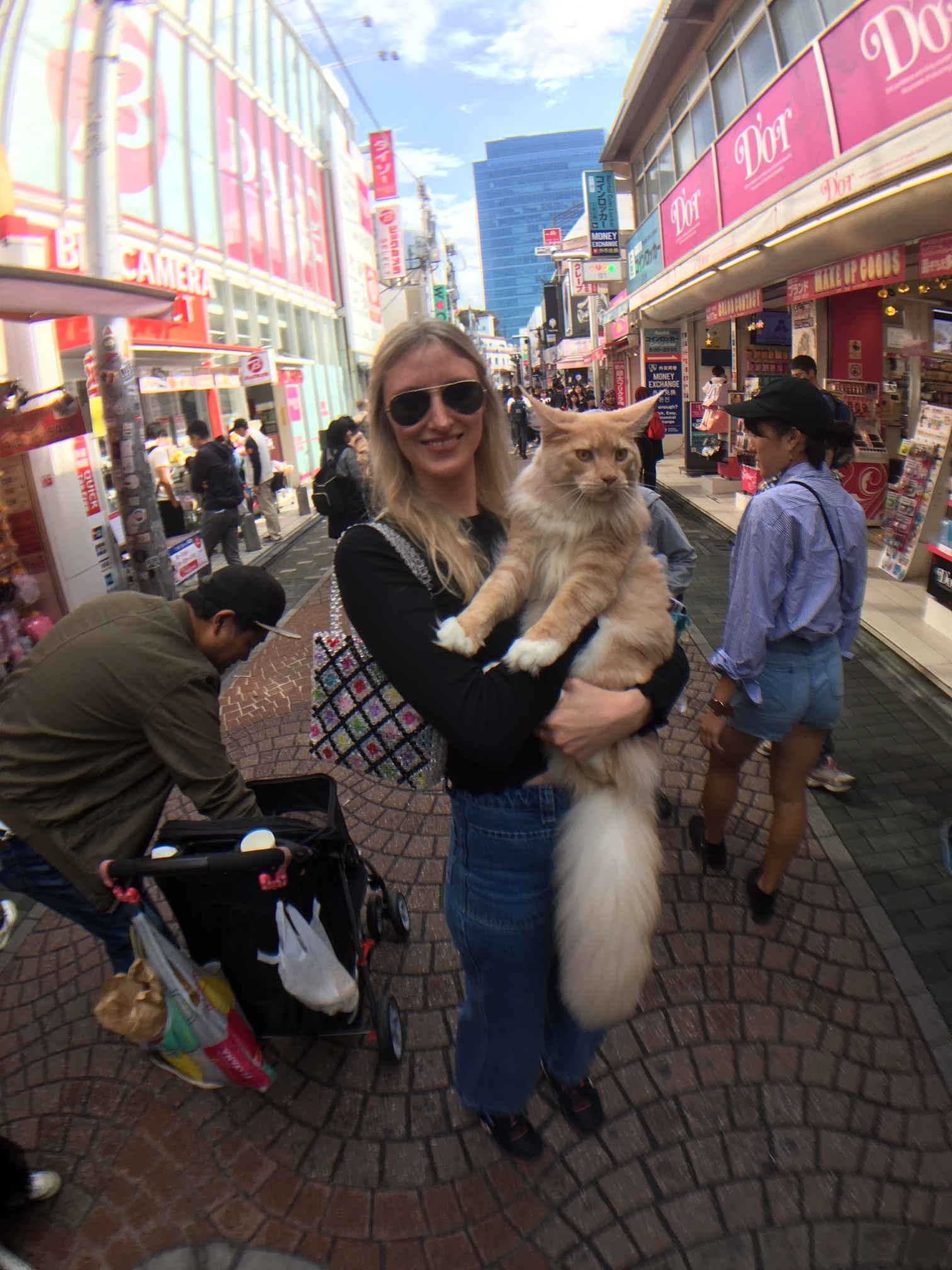 A Maincoon from a pram in Harajuku, only in Japan.