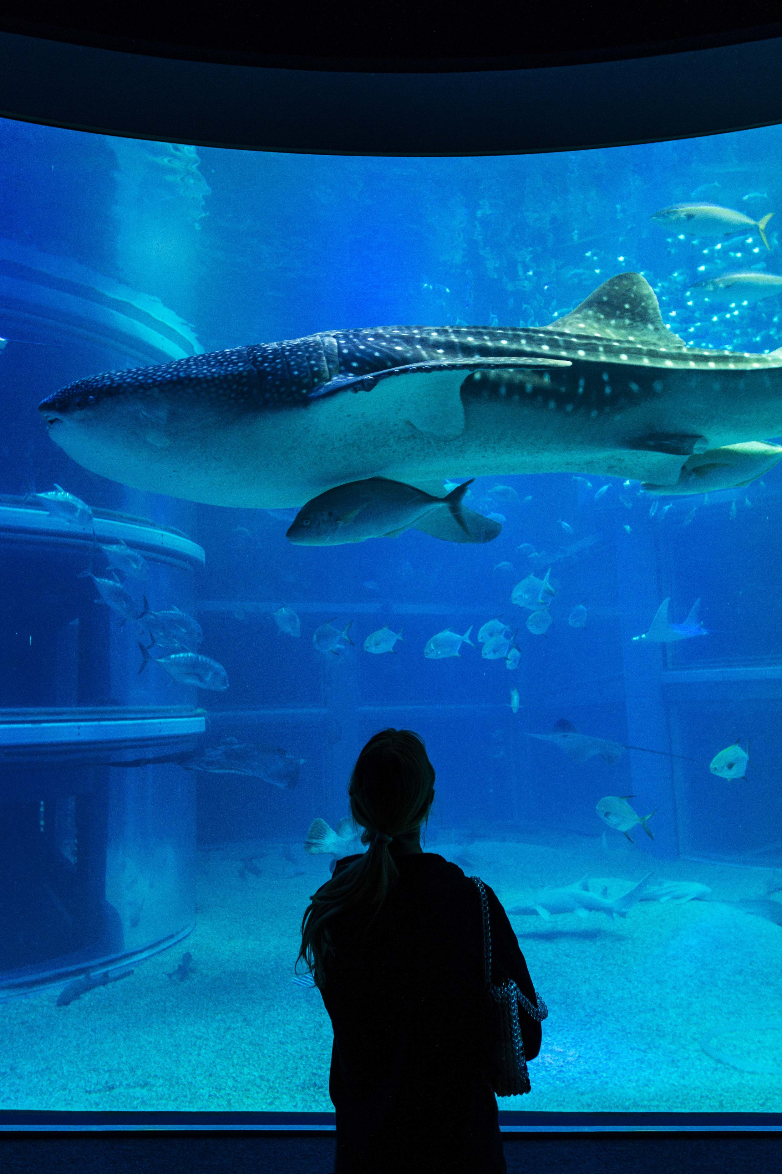 Elena stands under the Whale Shark at Osaka Aquarium