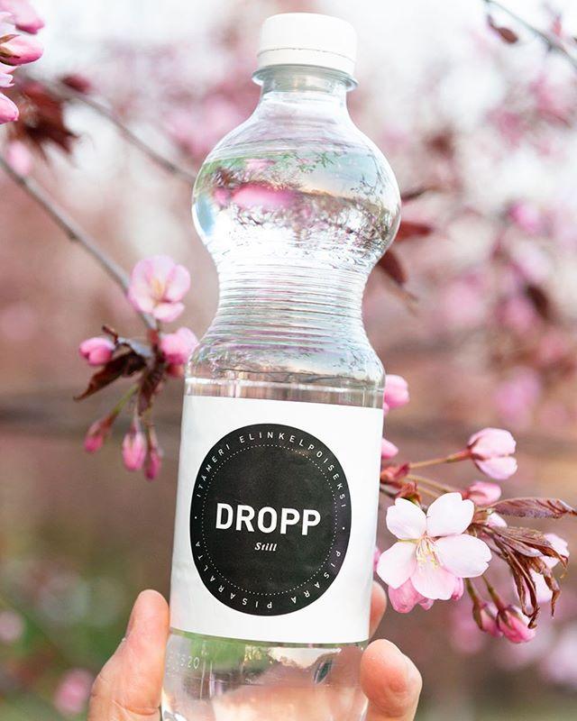 🌸 Iloista, vaaleanpunaista, kuplivaa, lempeää, keväistä vappua! 🌸  Juhlitaan kesän alkua ja tietenkin, kerätään pullot ja roskat mukaan. 💚  #vappu #iloistavappua #vappu2019 #kirsikankukat #kukassa #kevät #droppwater #everydroppforthebalticsea
