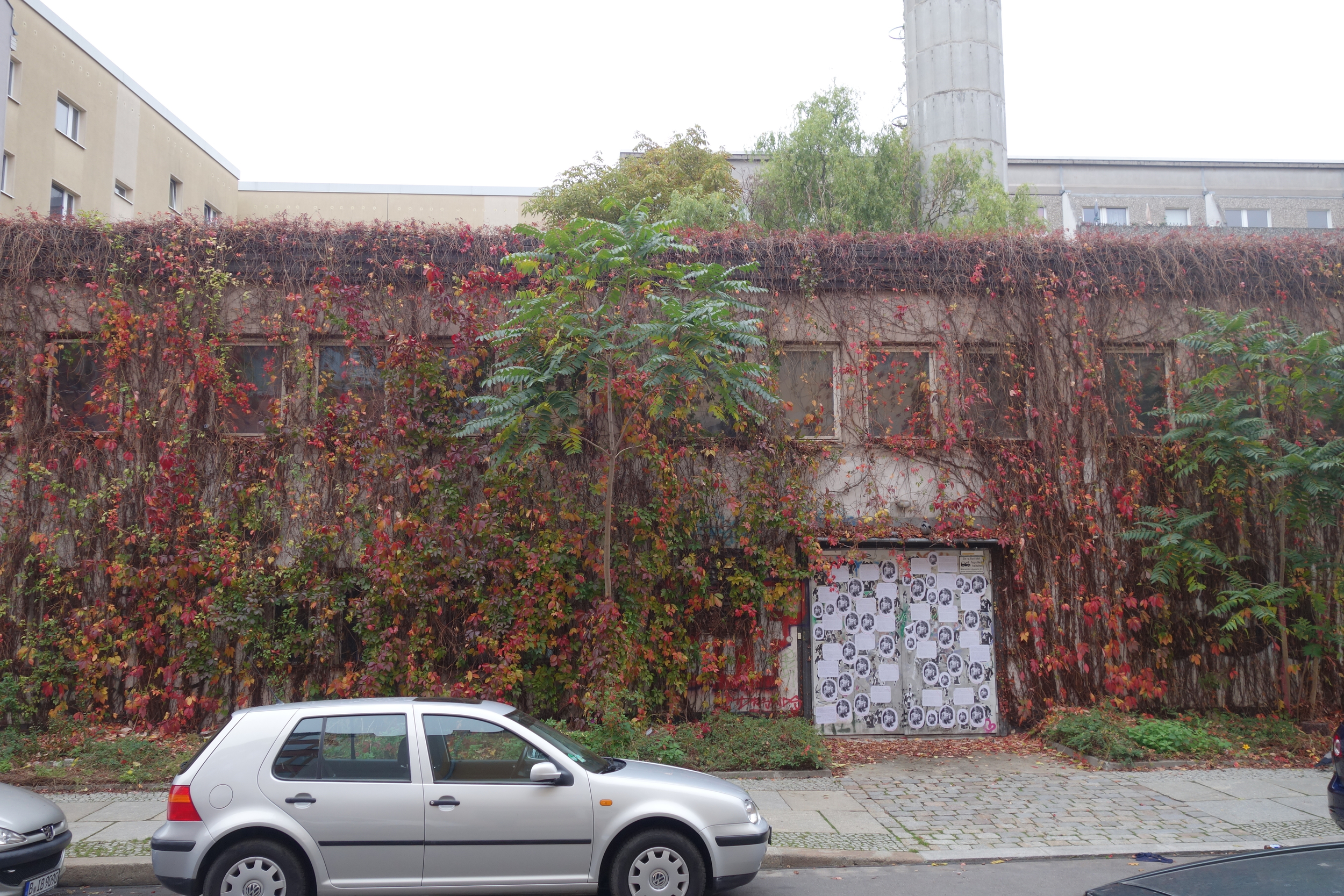 Mark spotted the old-growth vines on this Prenslauerberg squat.
