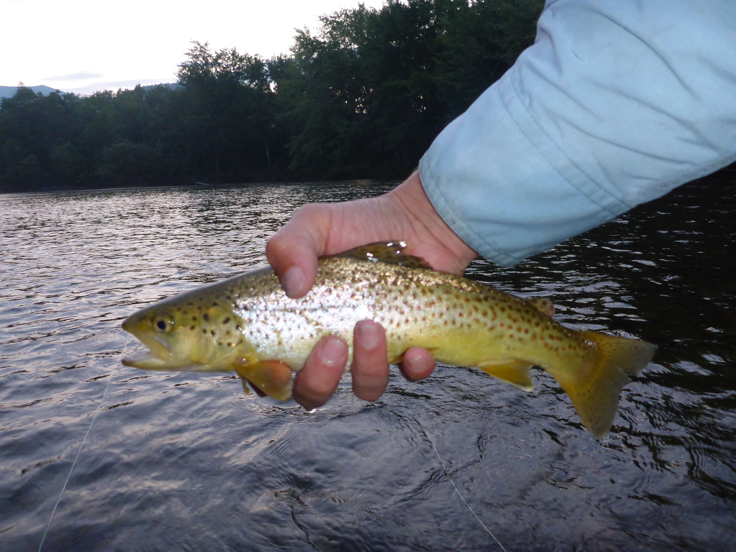 Evening brown on the Saco.