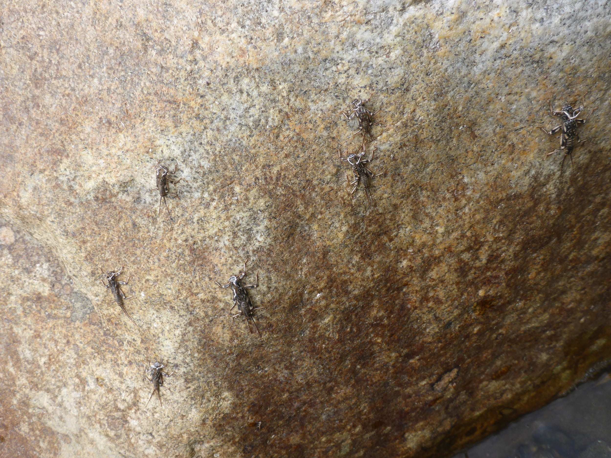 July means Stonefly city on the Andro