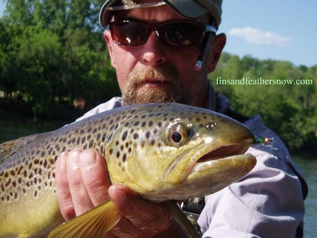 White River Brown.