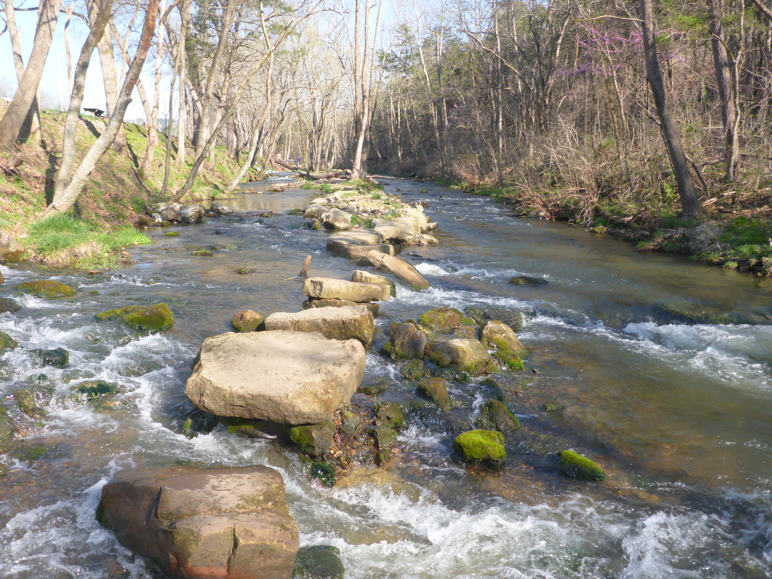 Dry Run Creek provides ideal trout habitat.