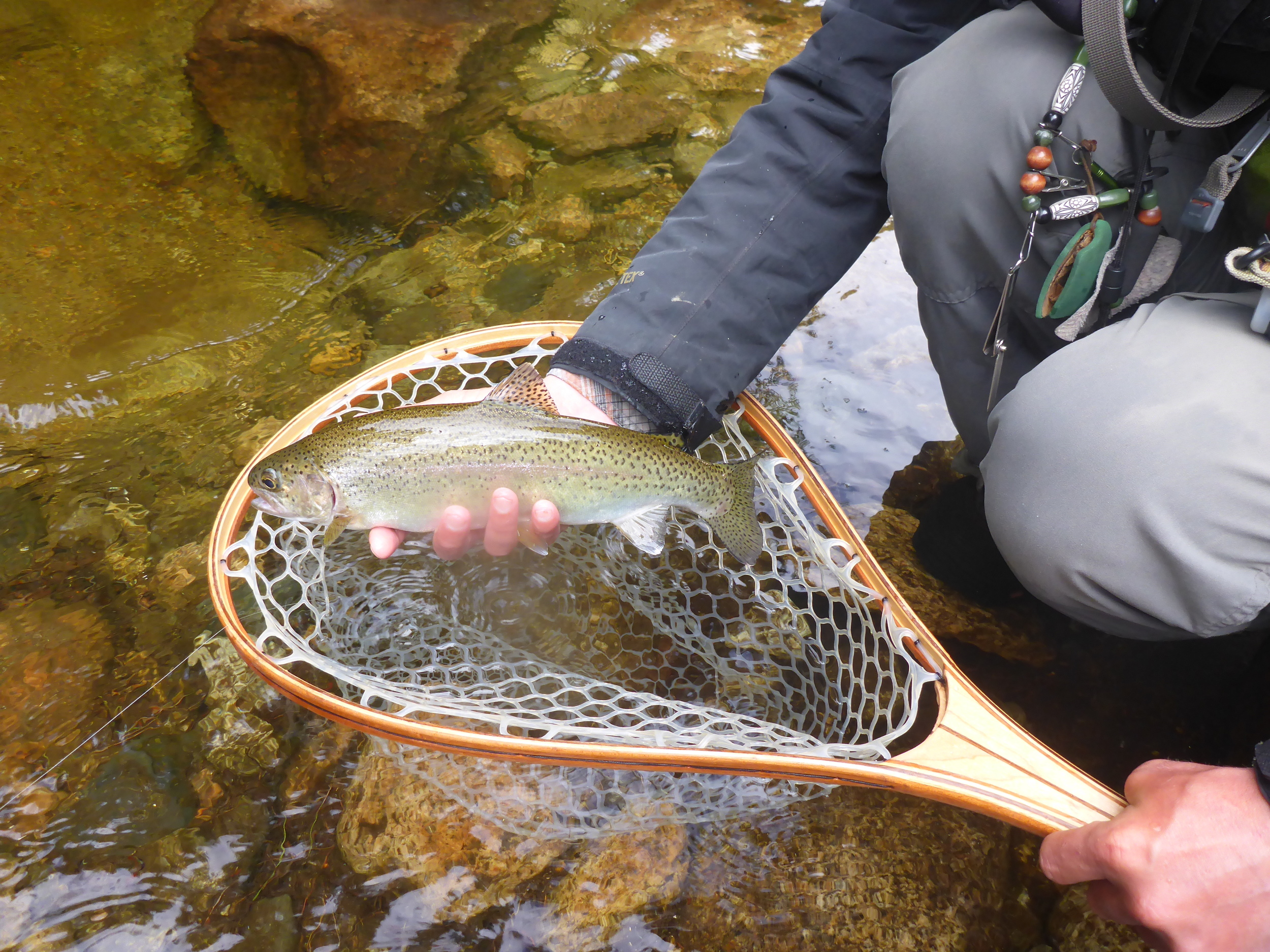 """Client Jacob Meder recently nymphed up this chunky 15"""" wild rainbow out of a small mountain stream."""
