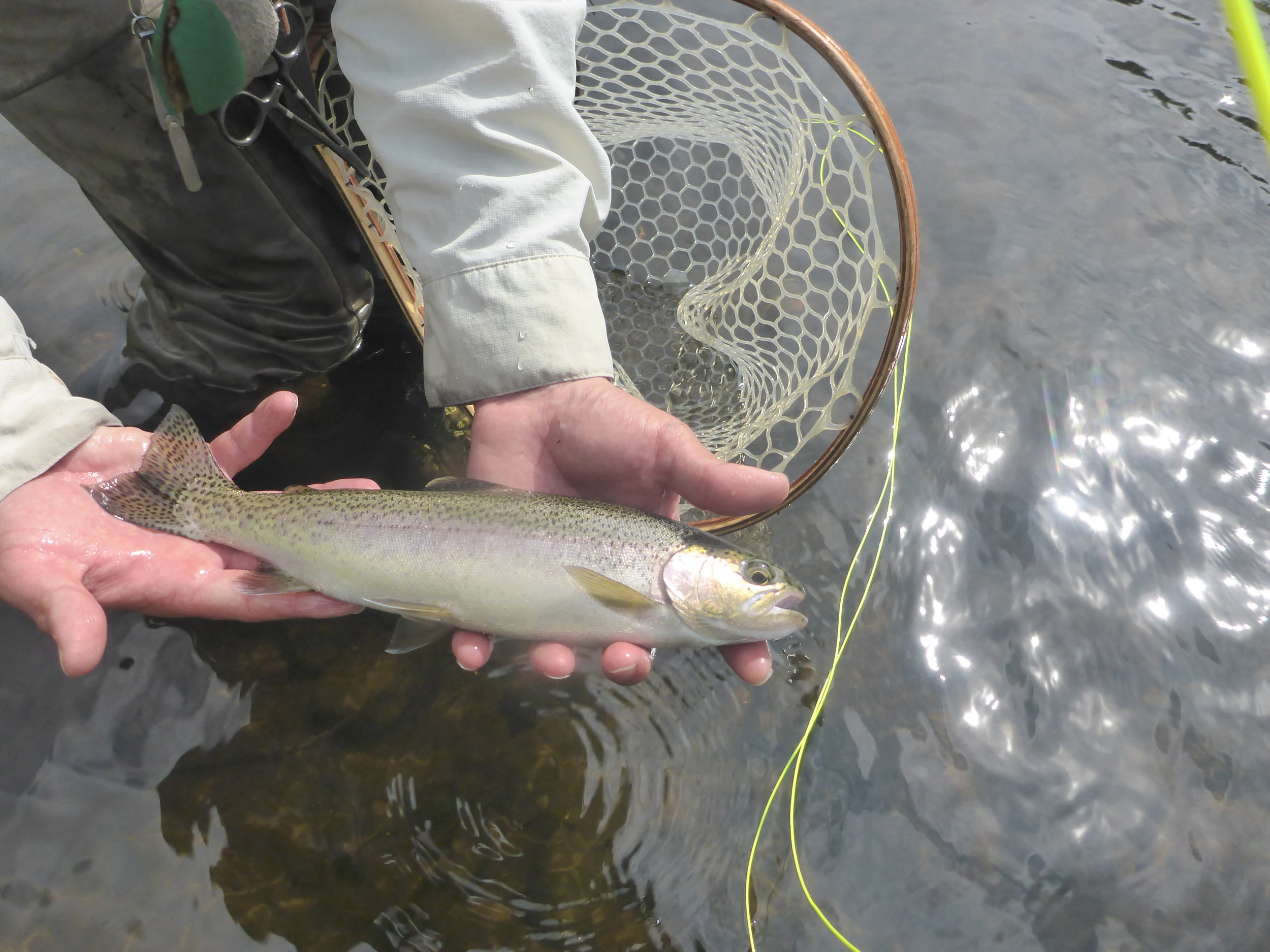 We have seen many fish of this year class this season...bodes well for next year!