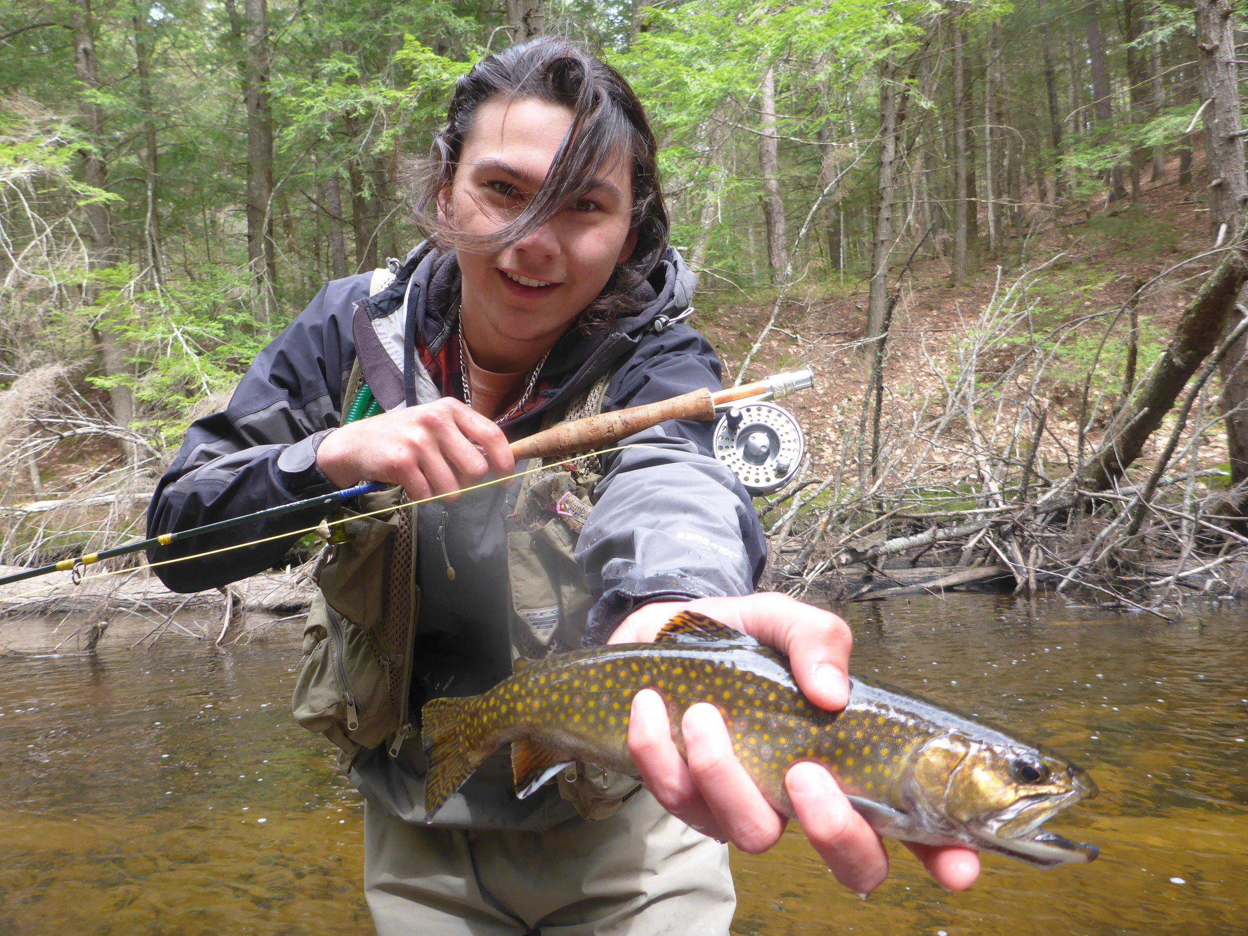 Spring creek wild brook trout May 15th 2016