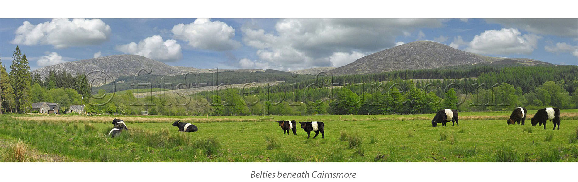 belties_beneath_cairnsmore.jpg