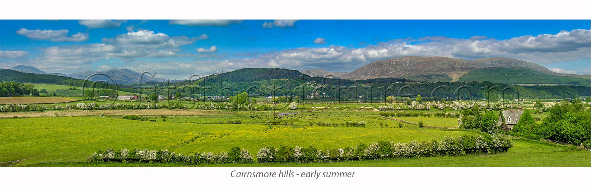 cairnsmore_hills__early_summer.jpg
