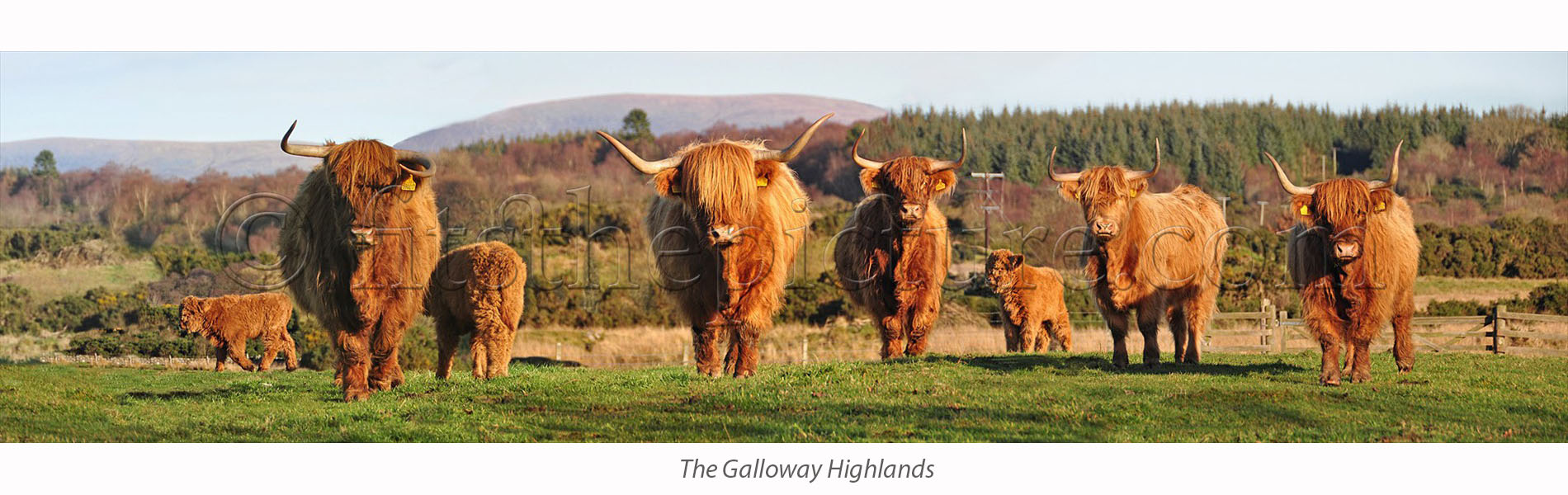 the_galloway_highlands.jpg