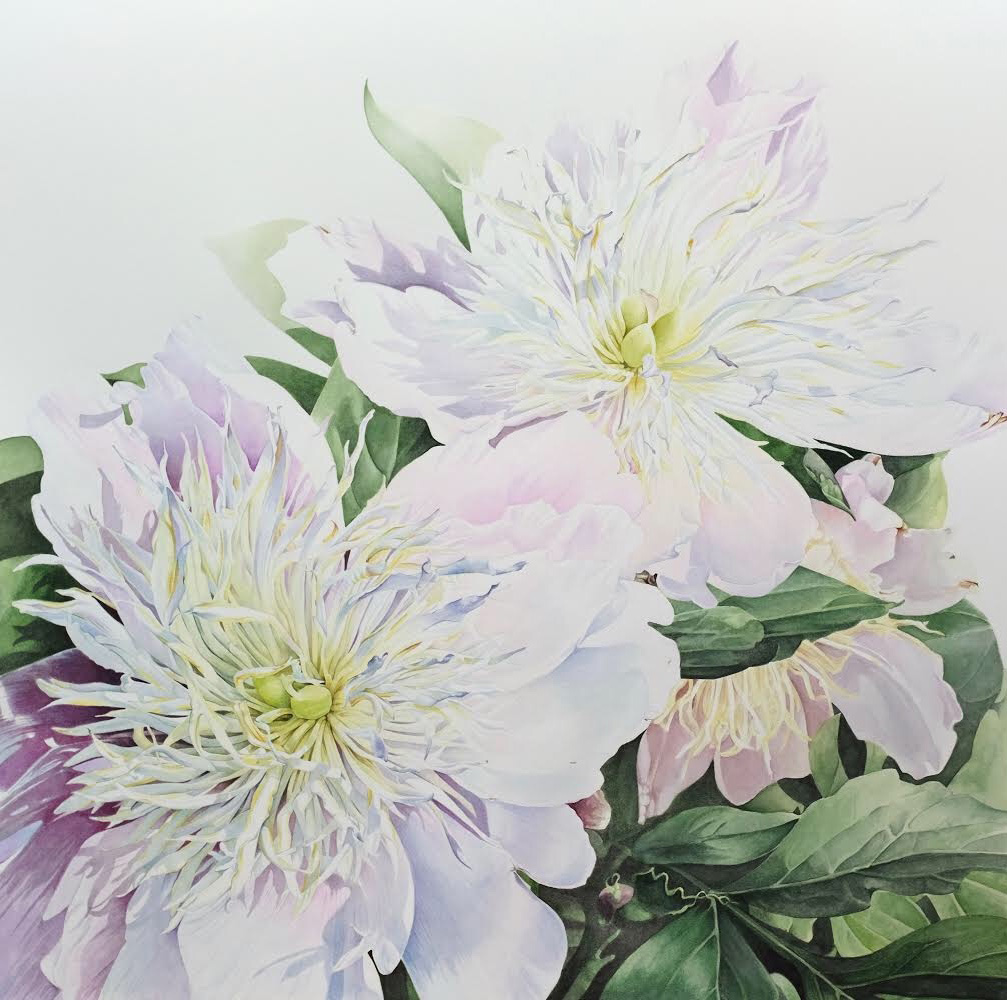 Kimberly Mathews watercolor art, botanical watercolor, peonies watercolor