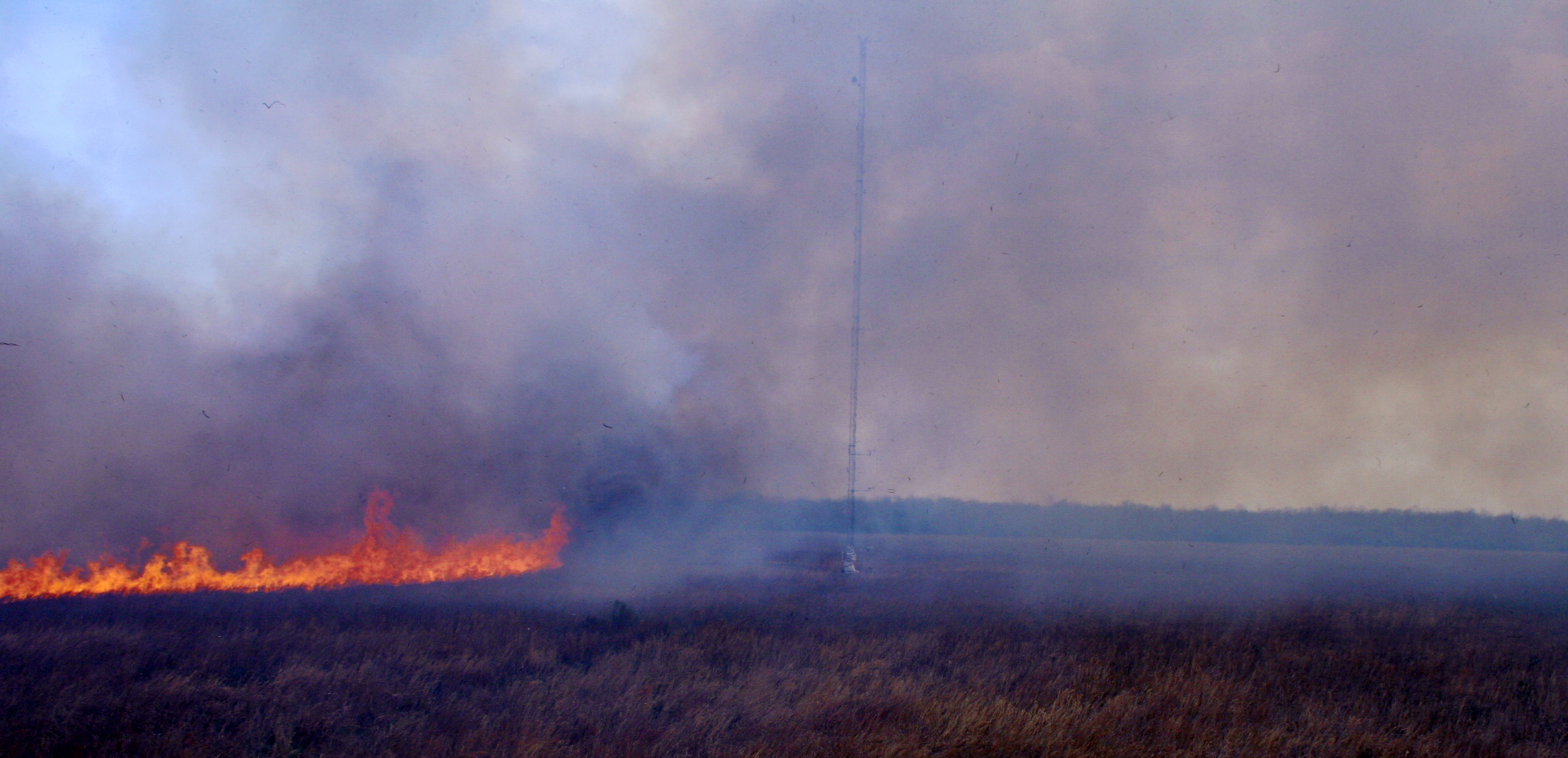 Fire front front moving towards the 43 m tall meteorological instrument tower during FireFlux, 23 Feburary 2006.