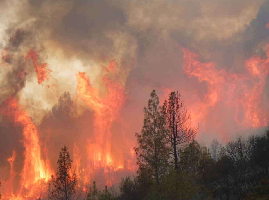 Crowning during the Stoney Fire at Fort Hunter Liggett (Photo: Richard Bagley)