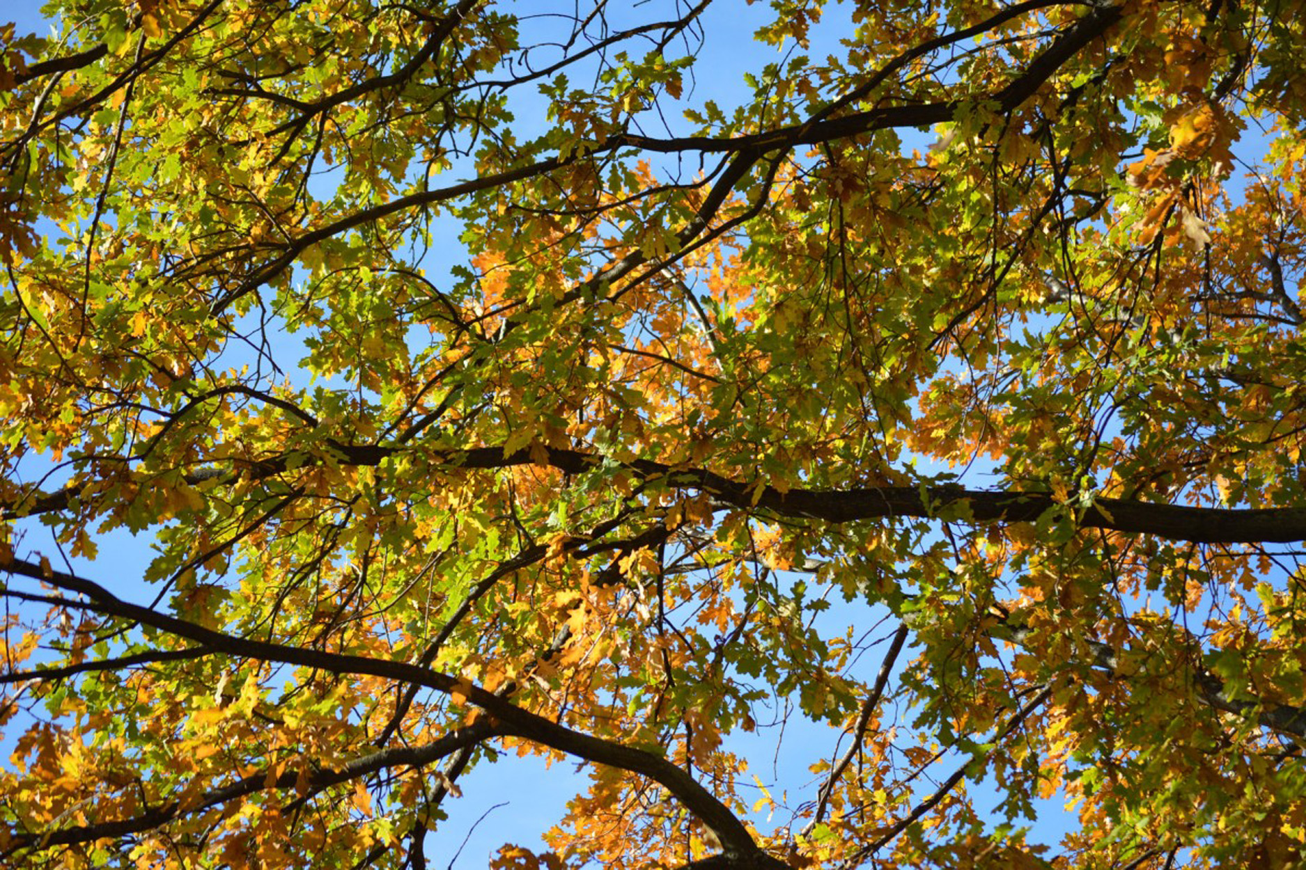autumn_fall_branches_leaves_colorful_tree_orange_nature-1265694.jpg