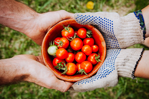 gardening-friends-elaine-casap.jpg