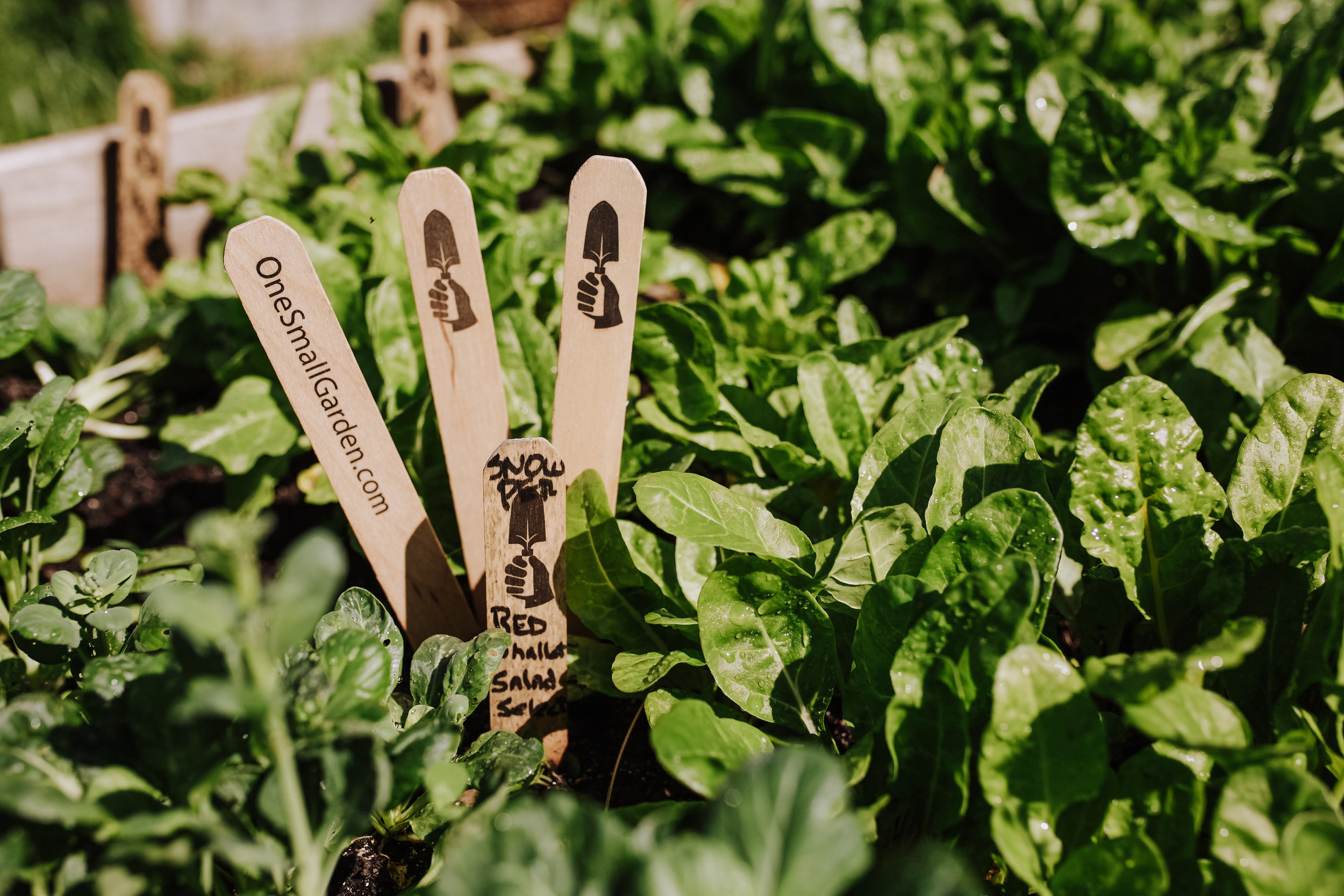 """To plant a garden is to believe in tomorrow."" - - Audrey Hepburn"