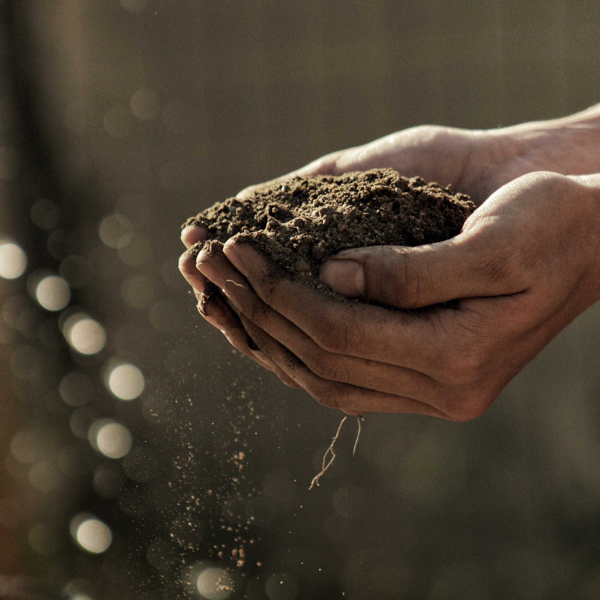 Hands holding nutrient dense soil.