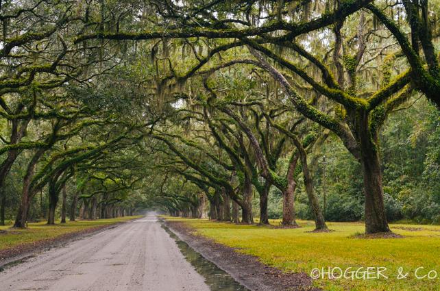 Savannah_Wormsloe_Plantation_2013_©HOGGER&Co._014.jpg