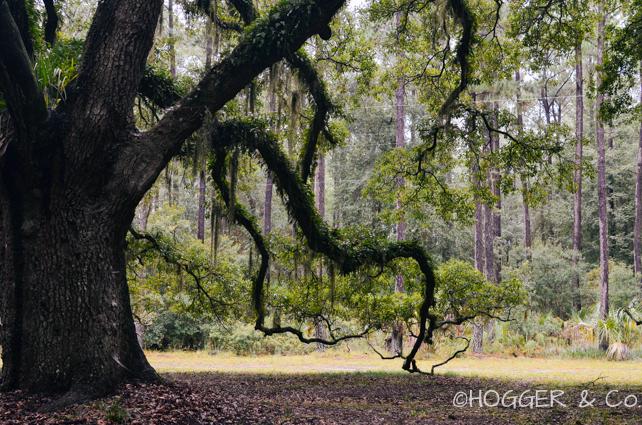 Savannah_Wormsloe_Plantation_2013_©HOGGER&Co._016.jpg