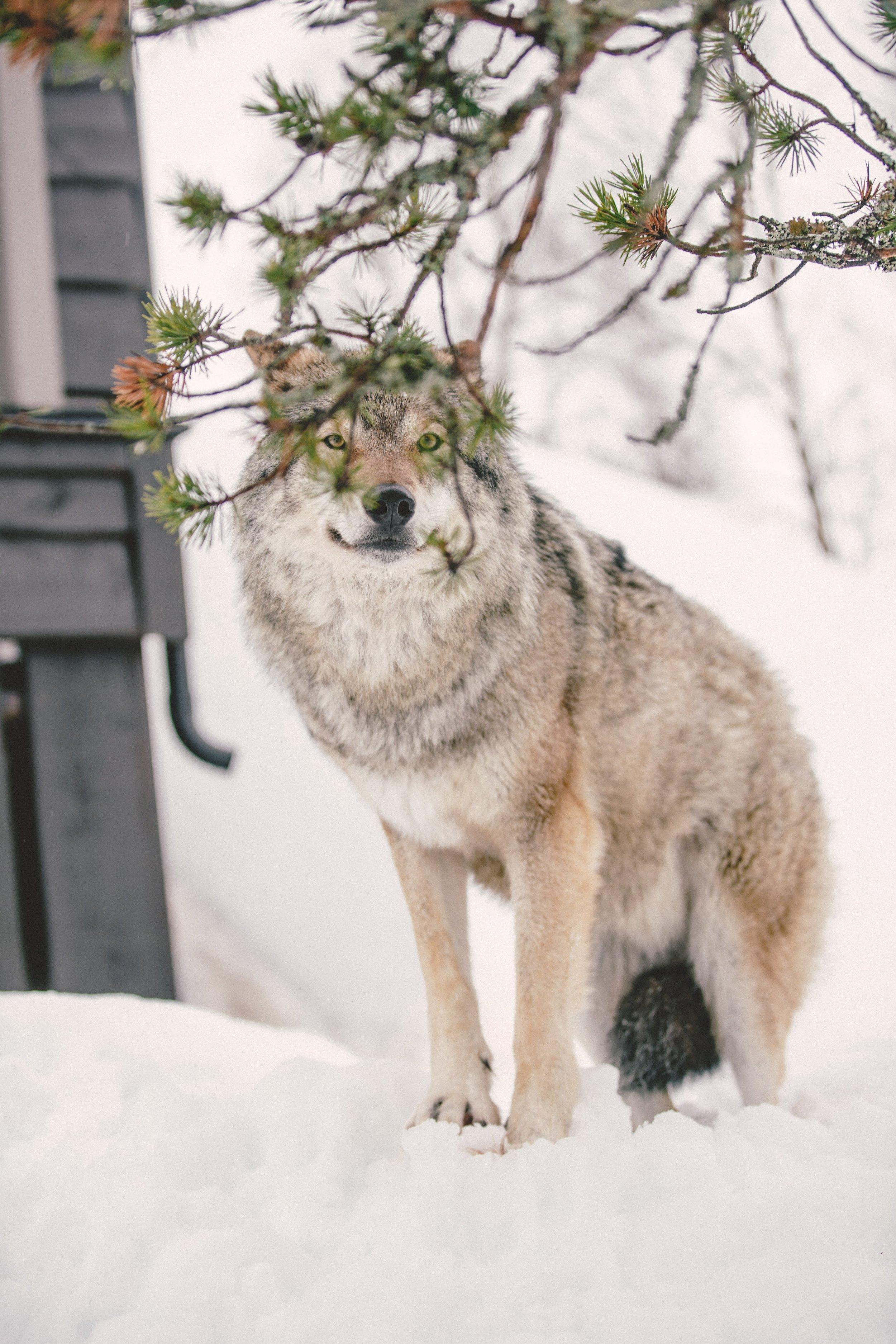 Simon Buxton for Porter Magazine Norway-59.jpg