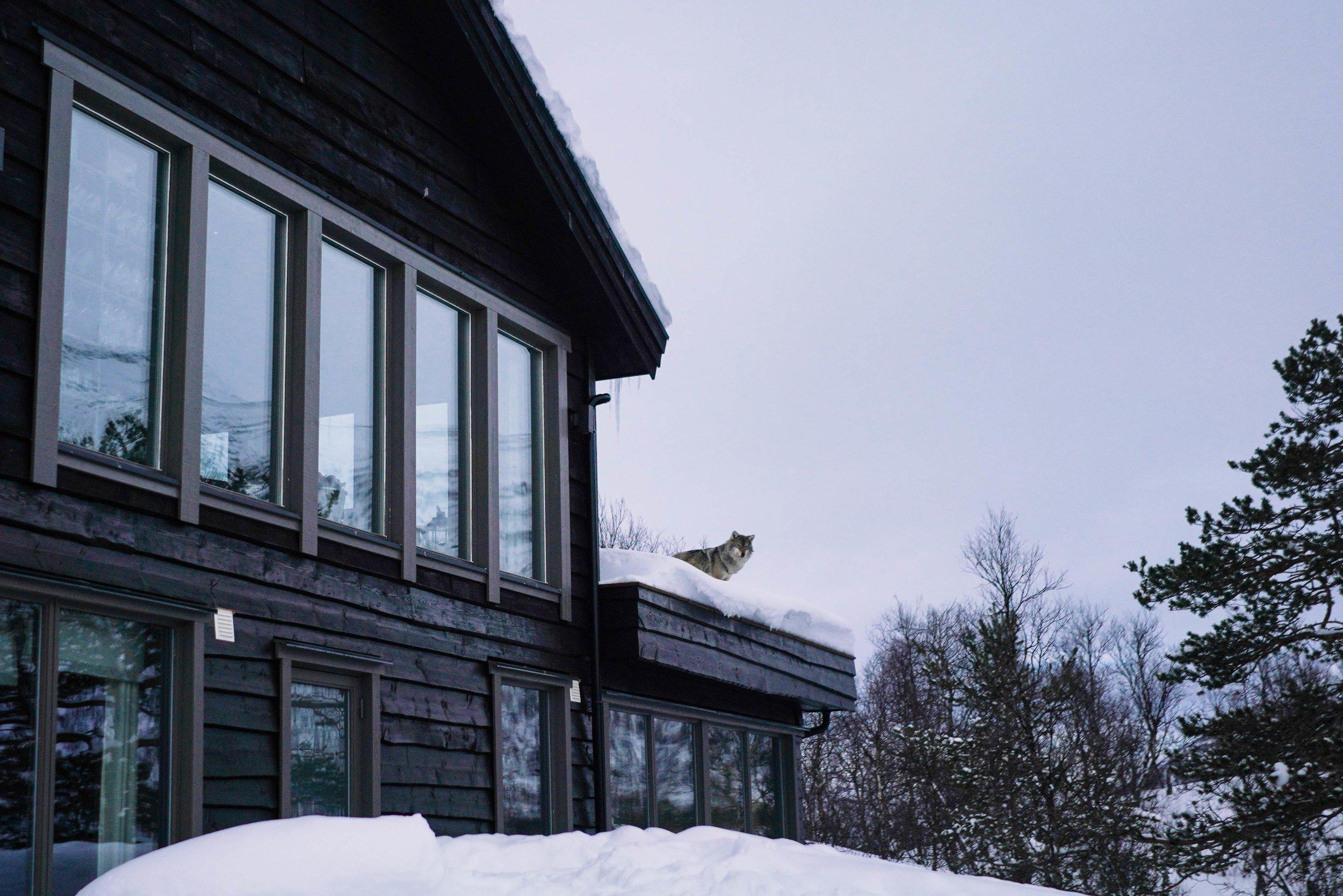 Simon Buxton for Porter Magazine Norway-24.jpg