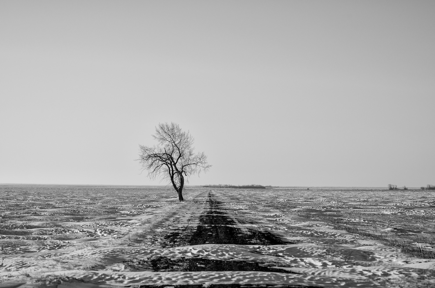 taylor_sheppard_photographer_manitoba_snow_winter_space_empty_tree_winter_cold.jpg