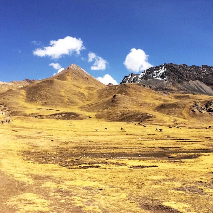 ovelhas, lhamas, cavalos, patos, vários animais vivem ali